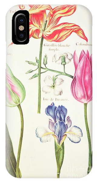 Flora iPhone Case - Flower Studies  Tulips And Blue Iris  by Nicolas Robert