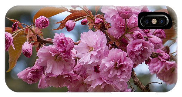 Flowering Almond II IPhone Case