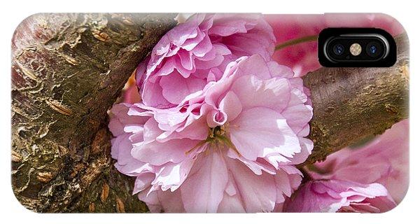 Flowering Almond IIi IPhone Case