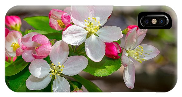 Flowering Cherry Tree Blossoms IPhone Case