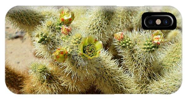 Flowering Cholla Cactus - Joshua Tree National Park IPhone Case