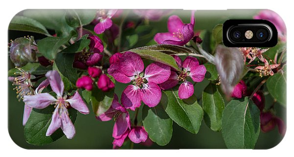 Flowering Crabapple IPhone Case