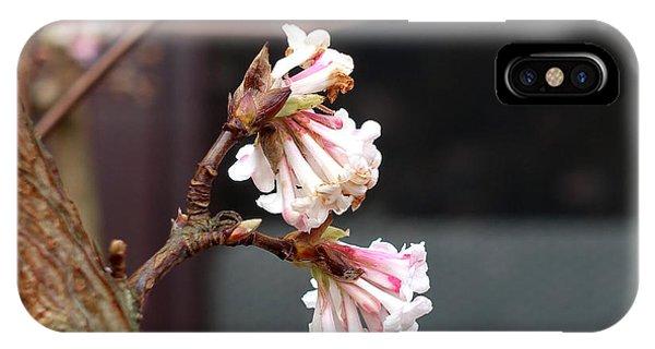 Flowering In December IPhone Case