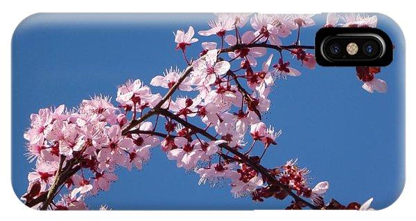 Flowering Of The Plum Tree 4 IPhone Case