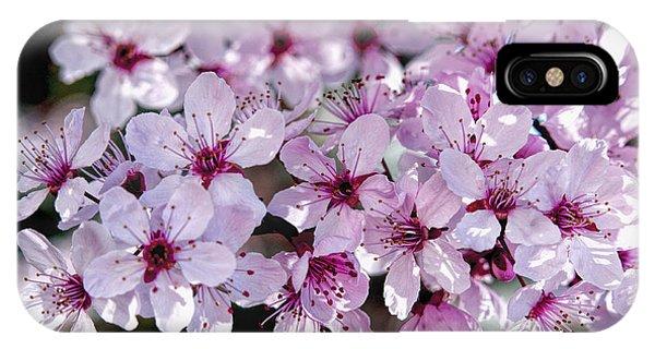 Flowering Plum IPhone Case
