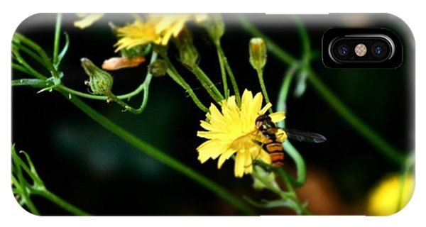 Petals iPhone Case - #flowers #flower #tagsforlikes #petal by Jason Michael Roust