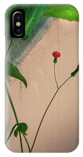 Flowers, Leaves And Wall IPhone Case
