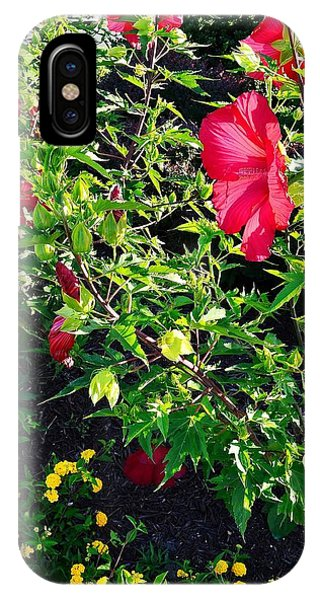Flowers Of Bethany Beach - Hibiscus And Black-eyed Susams IPhone Case