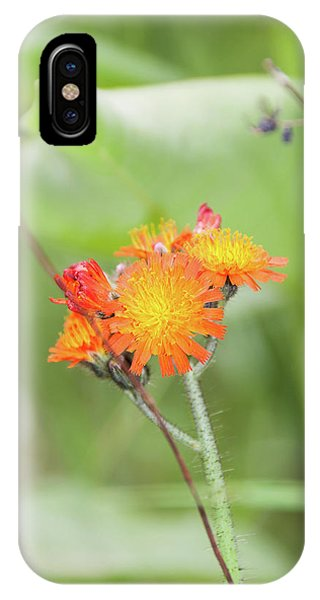 Flp-4 IPhone Case