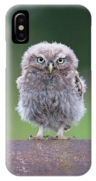 Fluffy Little Owl Owlet IPhone Case