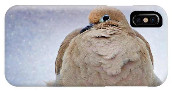 Fluffy Mourning Dove IPhone Case