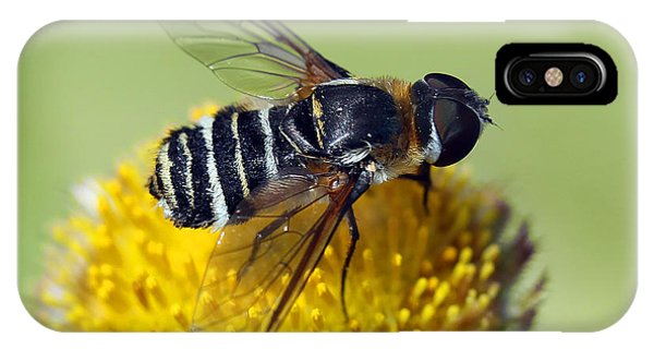 Fly On Flower IPhone Case