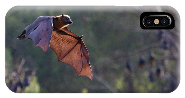 Flying Fox In Mid Air IPhone Case
