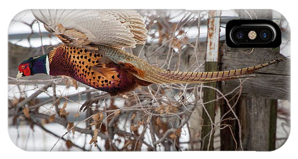Flying Pheasant IPhone Case