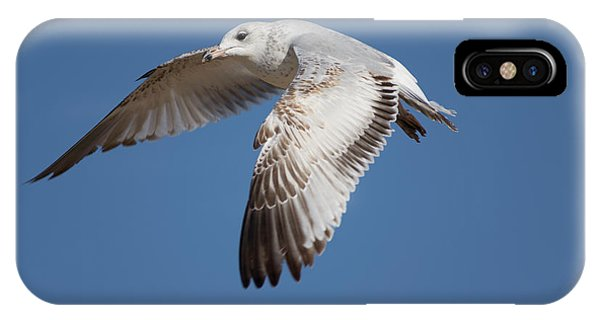 Flying Seagull IPhone Case