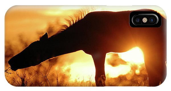 iPhone Case - Foal Silhouette by Shawn Hamilton