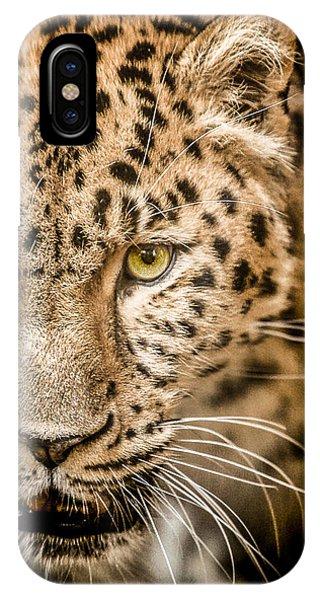 Leopard iPhone Case - Focus by Paul Neville