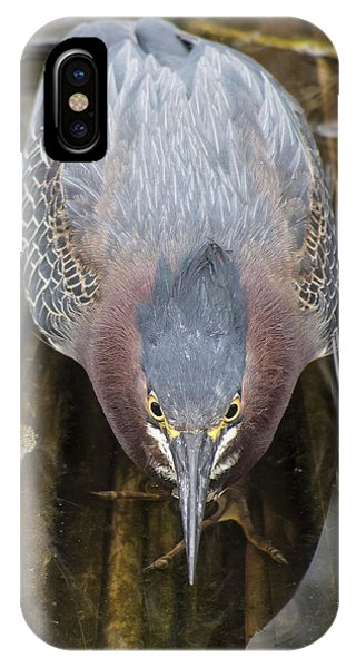 Focused Green Heron IPhone Case