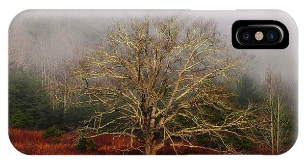 Fog Tree IPhone Case