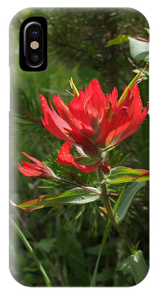 Foothills Paintbrush IPhone Case