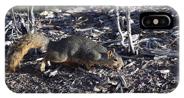 Squirrel Pprh Woodland Park Co IPhone Case