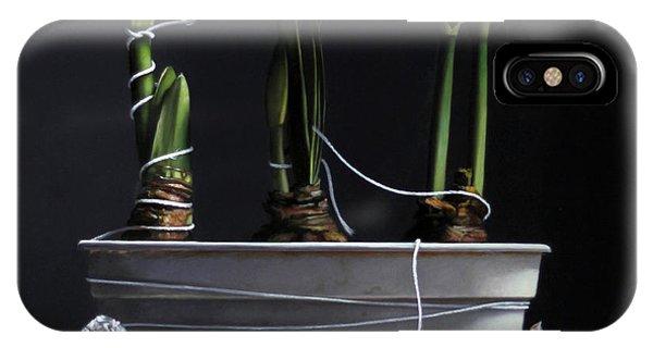 Amaryllis iPhone Case - Forcing Amaryllis by Lawrence Preston