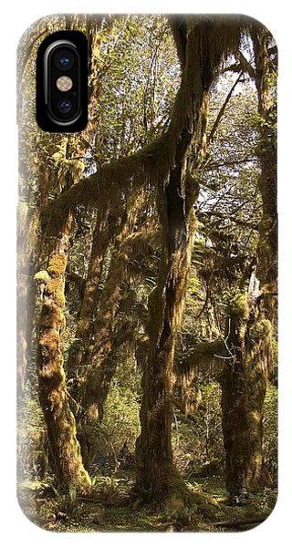 Forest Setting In Hoh Rain Forest IPhone Case