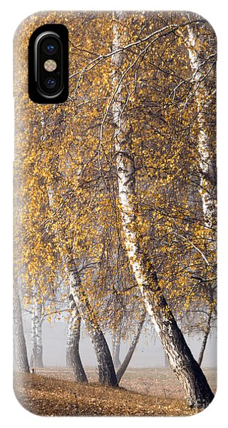 Forest With Birches In The Autumn IPhone Case