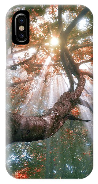 Forest With Fog And Sun Rays IPhone Case