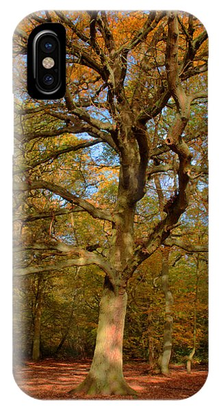 iPhone Case - Forestree by Chris Day