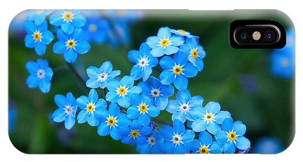 Forget -me-not 5 IPhone Case