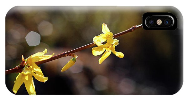 Forsythia Flowers IPhone Case