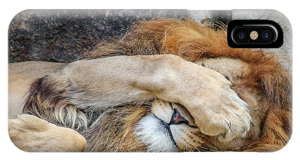 Fort Worth Zoo Sleepy Lion IPhone Case