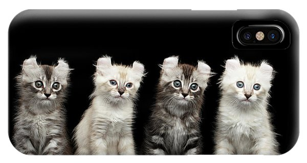 Cat iPhone Case - Four American Curl Kittens With Twisted Ears Isolated Black Background by Sergey Taran