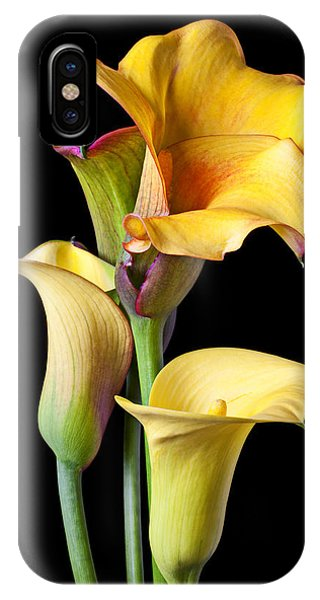 Floral iPhone Case - Four Calla Lilies by Garry Gay