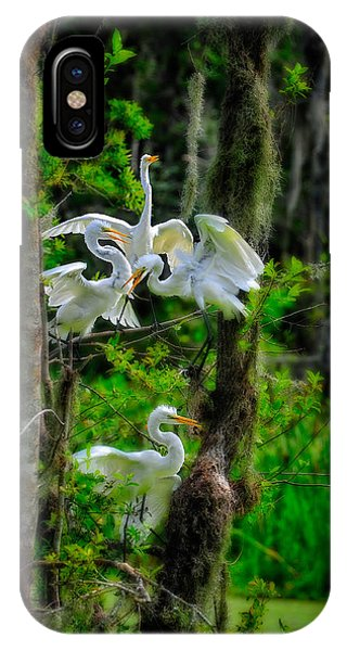 IPhone Case featuring the photograph Four Egrets In Tree by Harry Spitz