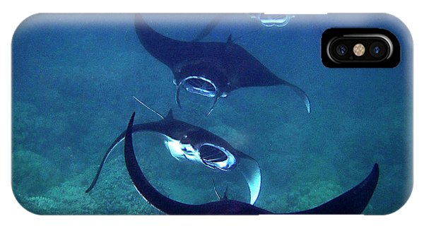 Four Manta Rays IPhone Case