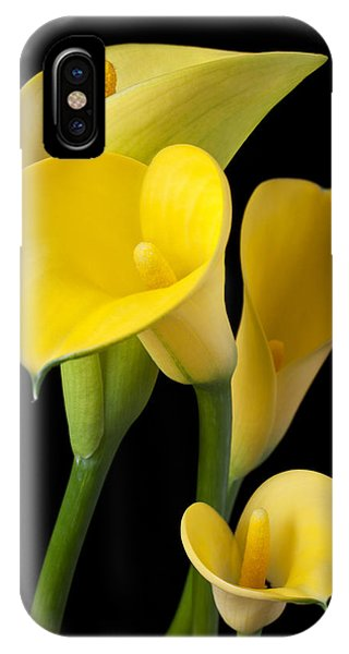 Floral iPhone Case - Four Yellow Calla Lilies by Garry Gay