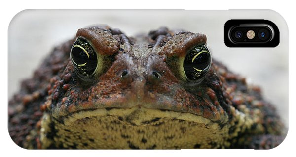 Fowler's Toad #3 IPhone Case