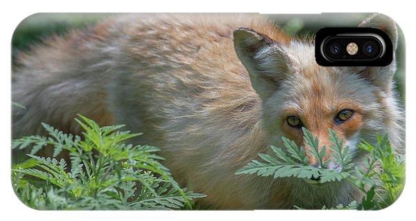 Fox In The Ferns IPhone Case