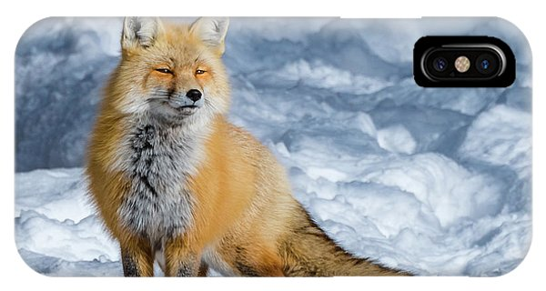 Fox On A Winter Afternoon IPhone Case
