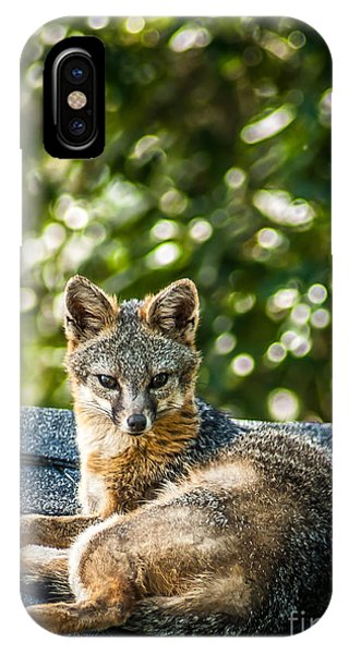 Fox On Roof IPhone Case
