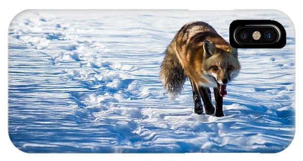 Fox Path IPhone Case