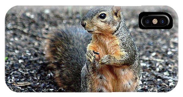 Fox Squirrel Breakfast IPhone Case