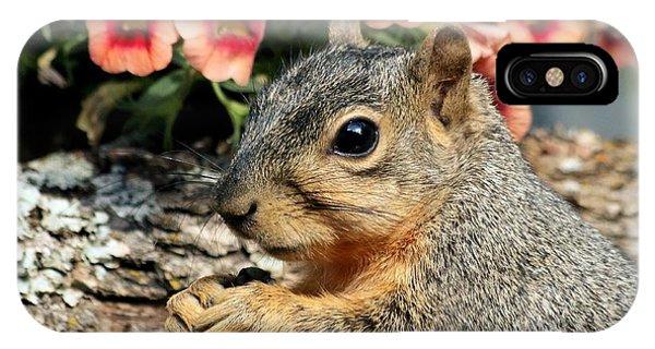 Fox Squirrel Portrait IPhone Case