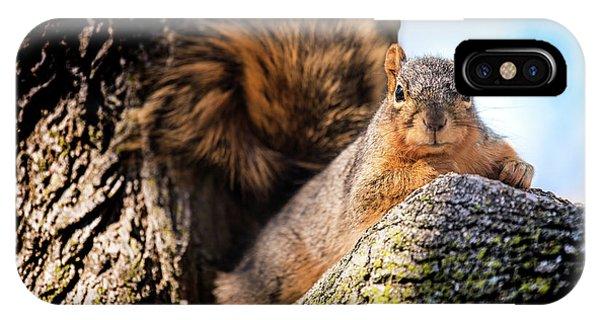 Fox Squirrel Watching Me IPhone Case