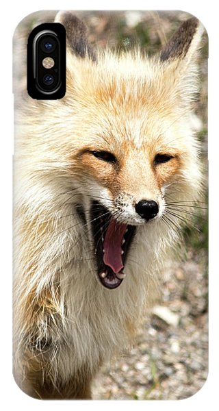Fox Yawn IPhone Case