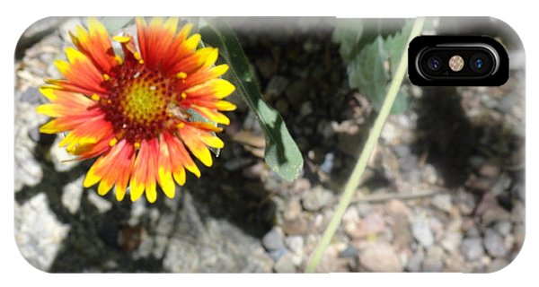 Fragile Floral Life On The Trail IPhone Case