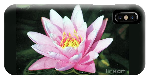 Frail Beauty - A Water Lily IPhone Case
