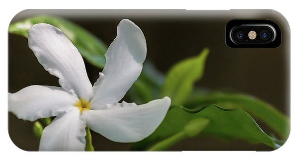 Frangipani Curves IPhone Case